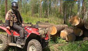 Незаконная вырубка леса статья и штраф